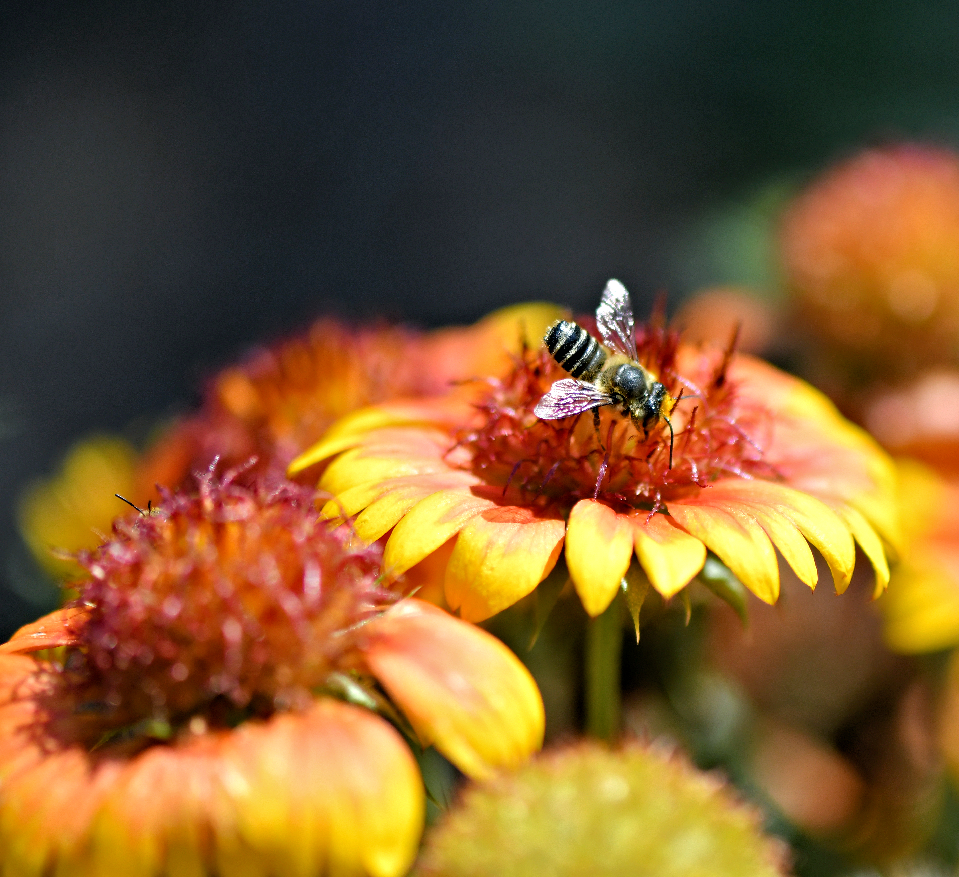 Bee Aware!