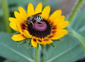 bee-still-devotional-8-6-2016